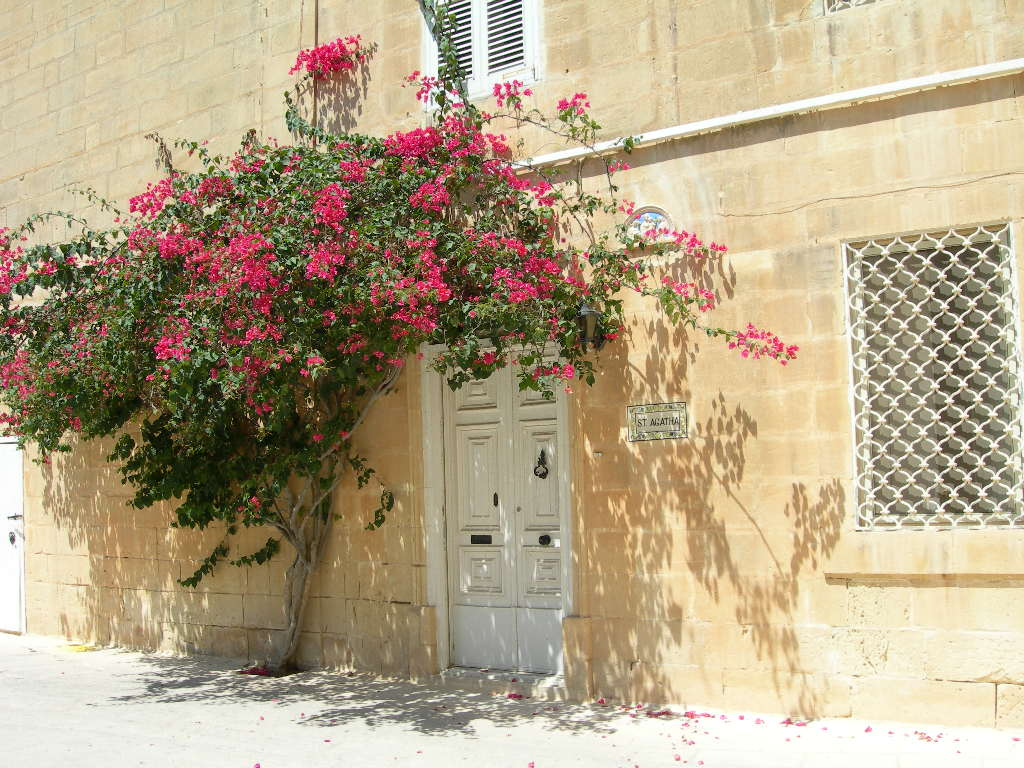 mdina travel